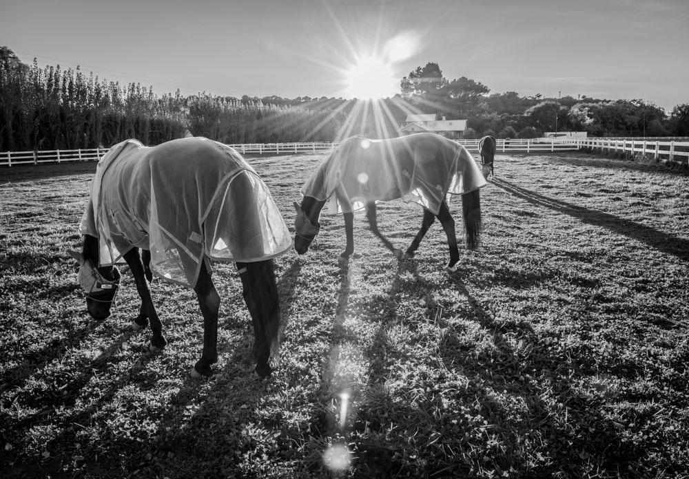 IR Horses-1.jpg