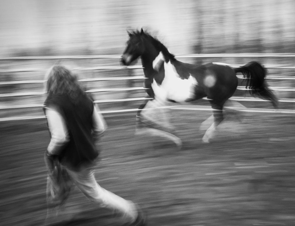 IR Horses-1-6.jpg