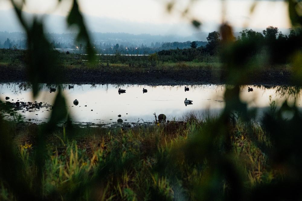 portland-oregon-pdx-pnw-waterfowl-duck-hunting-camo-swamp-mallard-ducks-geese-goose-shotgun-gun-hunters-decoys-gylfphe-photography-documentary-04