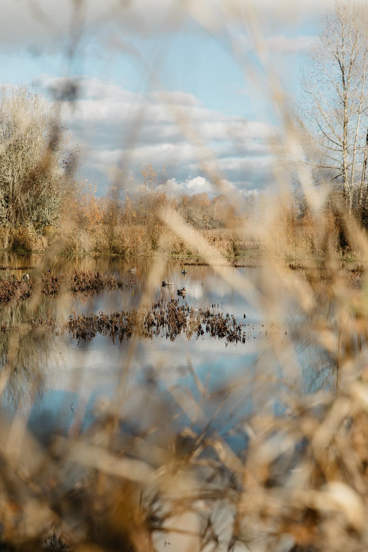 portland-oregon-pdx-pnw-waterfowl-duck-hunting-camo-swamp-mallard-ducks-geese-goose-shotgun-gun-hunters-decoys-gylfphe-photography-documentary-21