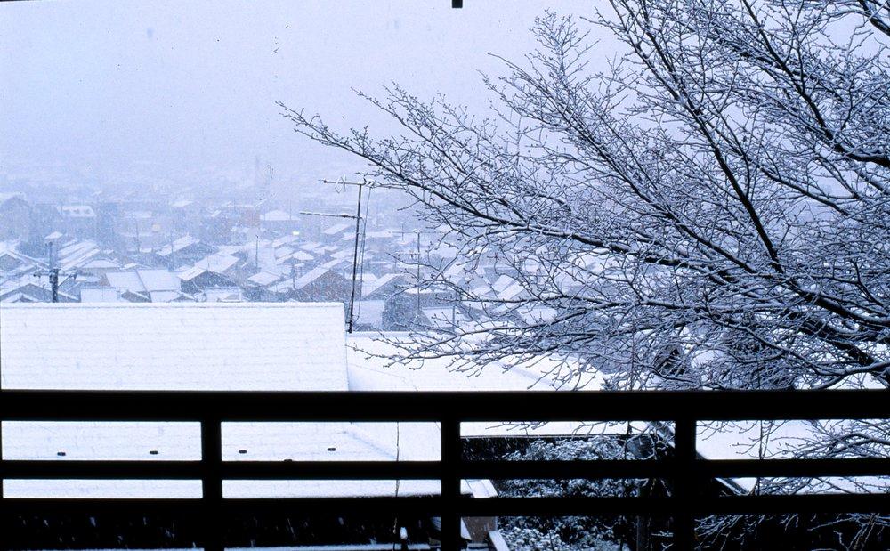 Sakura Cherry Tree, Winter
