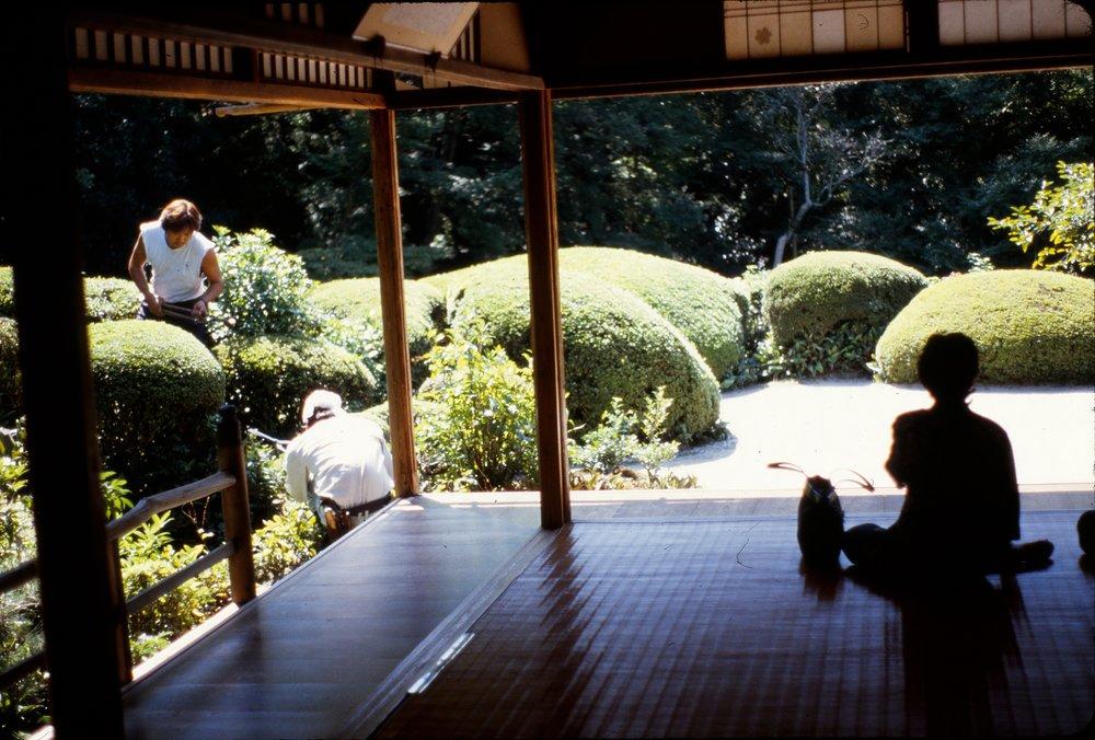 Tamamono, sheared and mounding shrubs