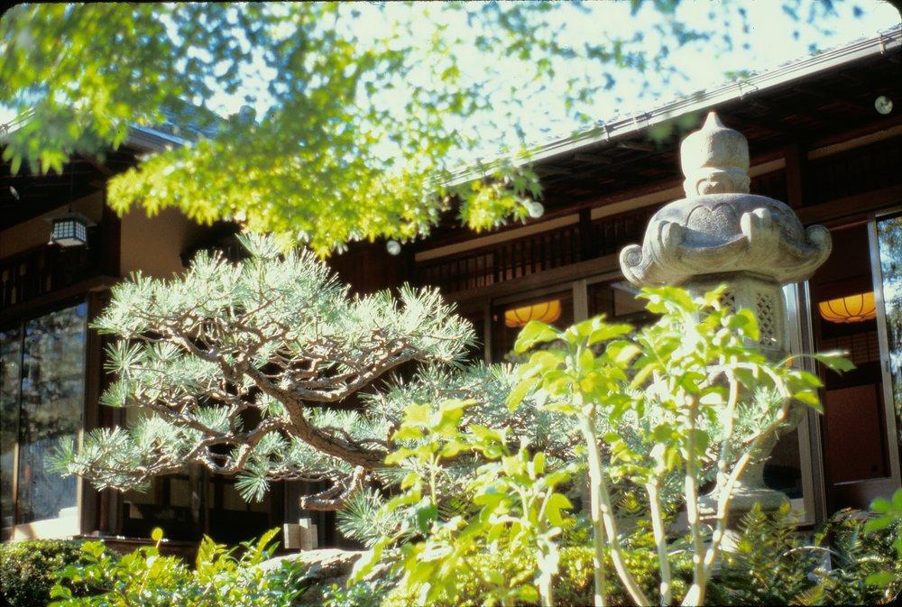 Matsu, pine