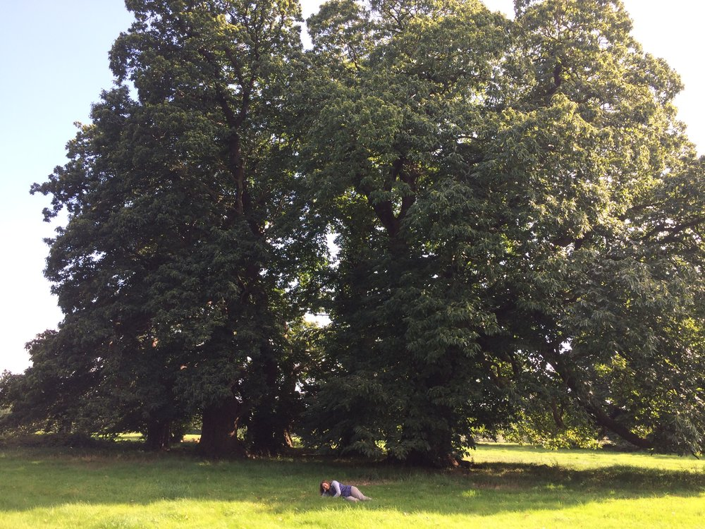 Sweet Chestnut 800-1,200 years old-secret location!