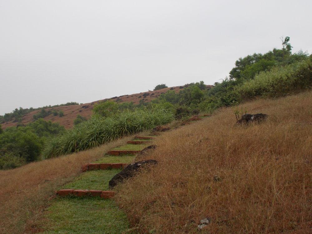 Ficus-landscape-bangalore-nature trail-maharashtra-resort-image-01