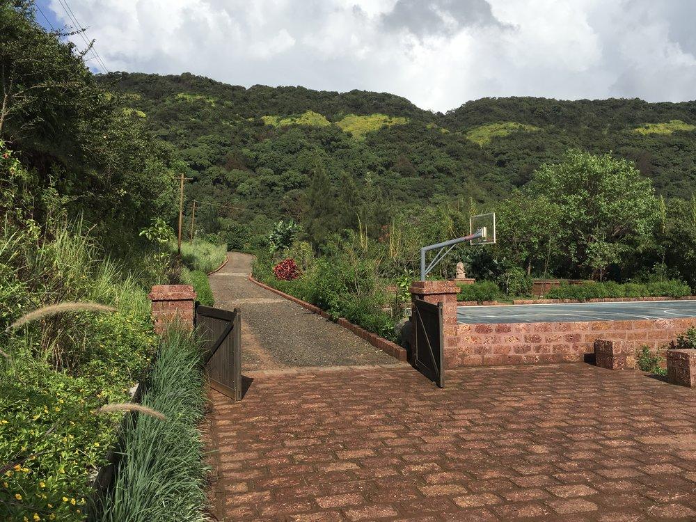 Ficus-landscape-bangalore-farmhouse-storms end-planting-02
