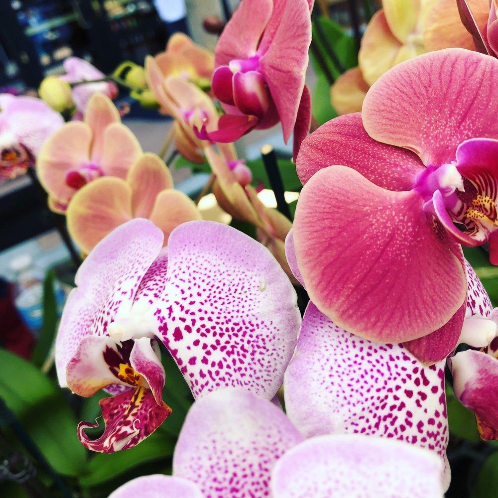 Gladys's Garden - Fresh Orchids