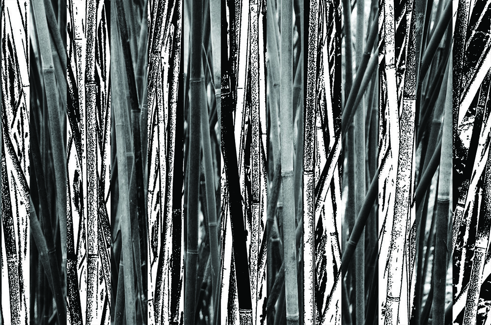 Bamboo 3. Digital Drawing/Photography. 2016