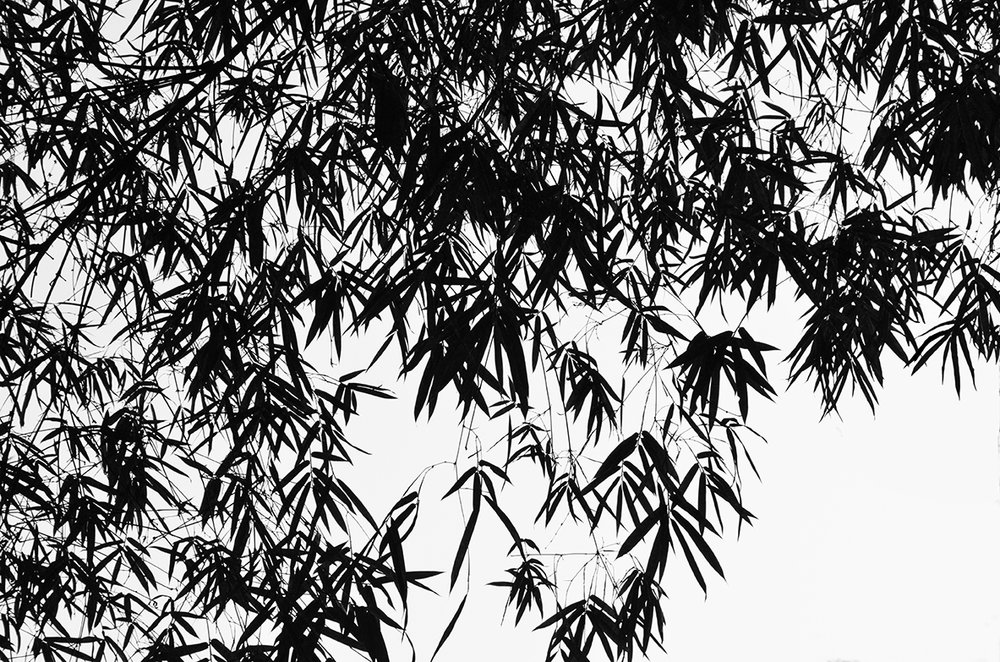 Bamboo 2. Photography. 2016 .