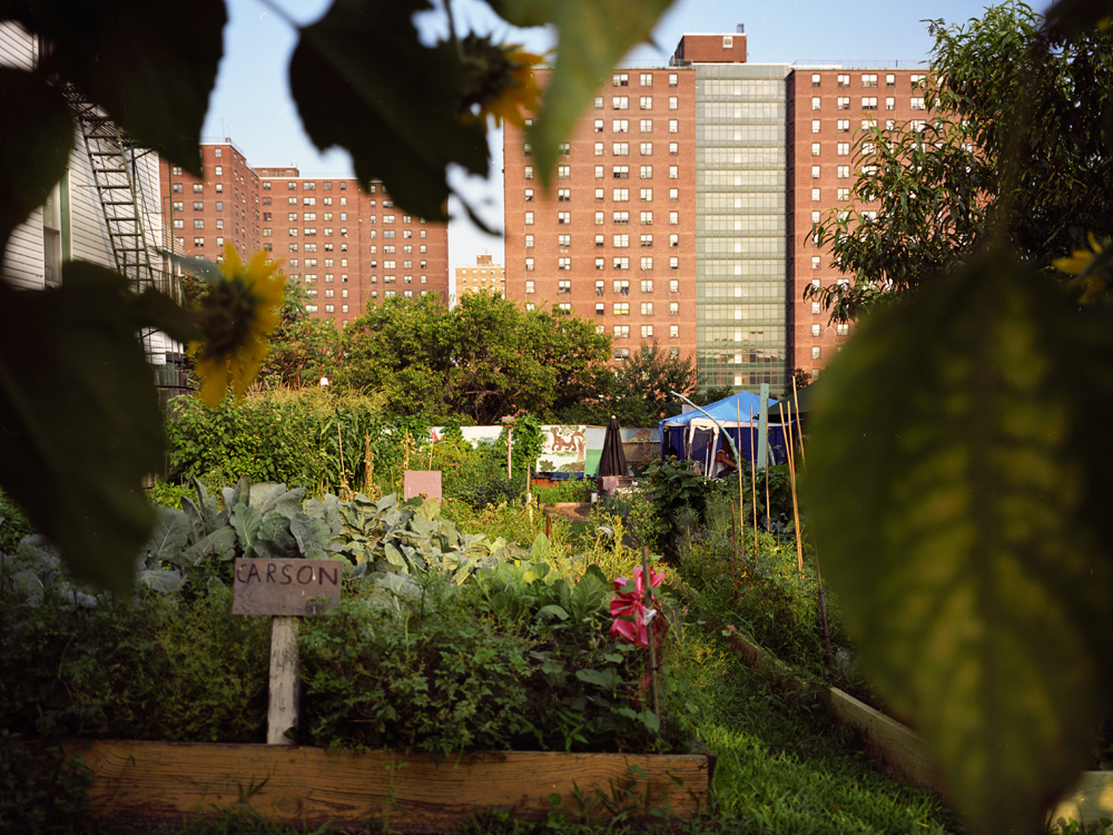 Clay Garden, built on the site of a burned down home by a resident across the street,   provides urban farming opportunities for local residents.    In the background, are the Webster Morrisania public Housing projects which house over 2000 people and are one of the poorest demographics in the Bronx