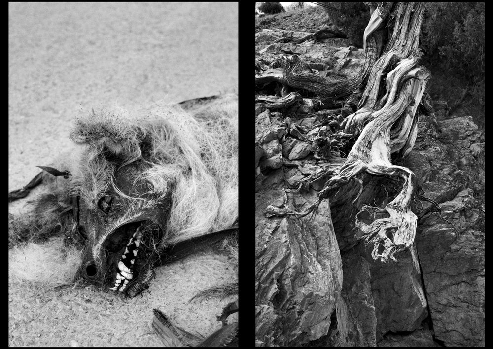 The carcass of a dog on the road of Dawar, in the Gurez Valley.