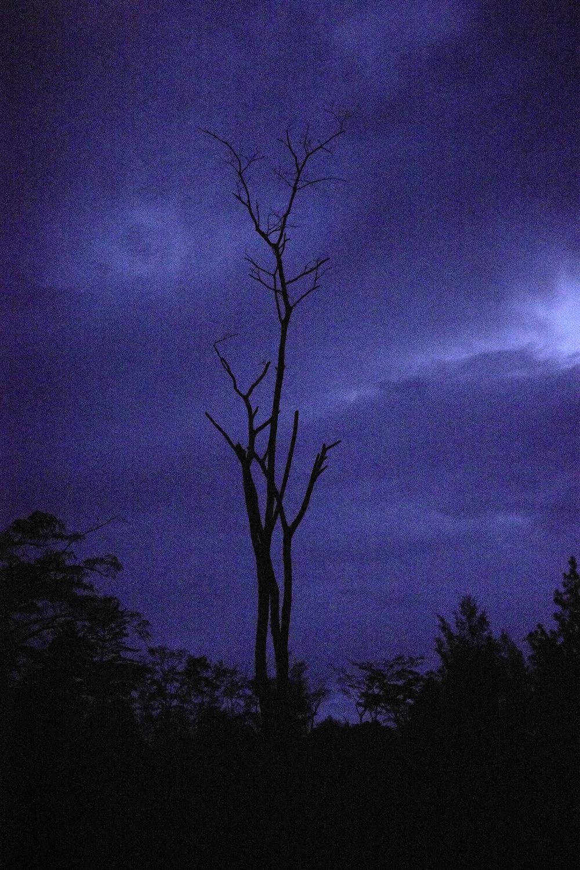 Sanguma fly round at night.