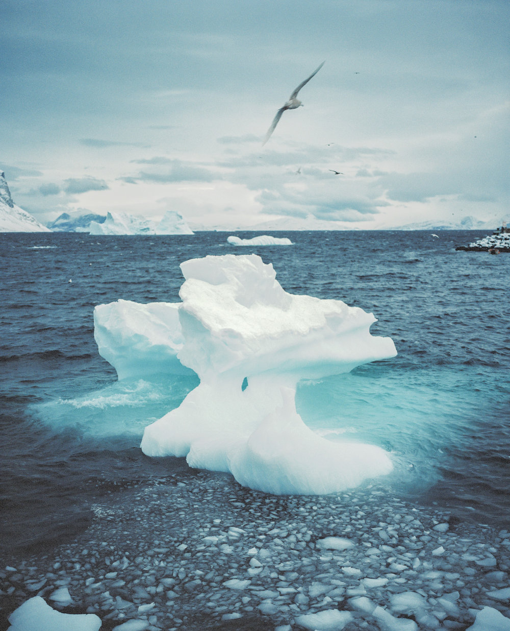 The arctic continuous to melt with each passing minute through global warming. The average temperature in the arctic has increased about almost 4 degrees since the beginning of the 20th century.