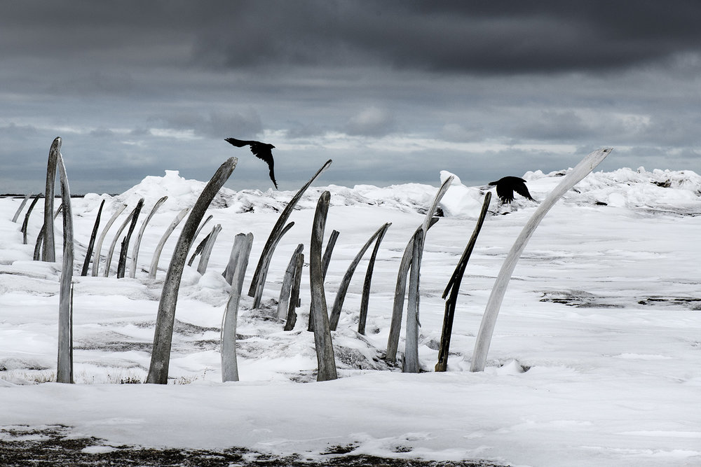 USA, Alaska, Tikigaq (Point Hope), May 2018The cemetery of Point Hope, the boundaries are marked by the bones of the Bowhead whale.The Inuit community of Point Hope is allowed to catch 10 bowheads per year.Nowadays due to the early disappearance of the sea ice its much harder for the community to catch whales and it threatens their livelihood. The Inuit community of Point Hope is allowed to catch 10 bowheads per year. Native communities are allowed to hunt whales for their own use. The quotum is given by the International Whaling Commission.Nowadays due to the early disappearance of the sea ice its much harder for the community to catch whales and it threatens their livelihood. Normally the hunting starts when the sea ice starts to break in the spring. When the whales migrate up north, they use the channels to come up for breathing. If there is no ice they are spread out over a much wider area and are much more difficult to track.Kadir van Lohuizen / NOOR for Carmignac Fondation