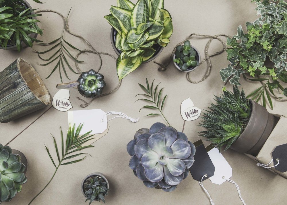 Potted Plants, Gift.jpg