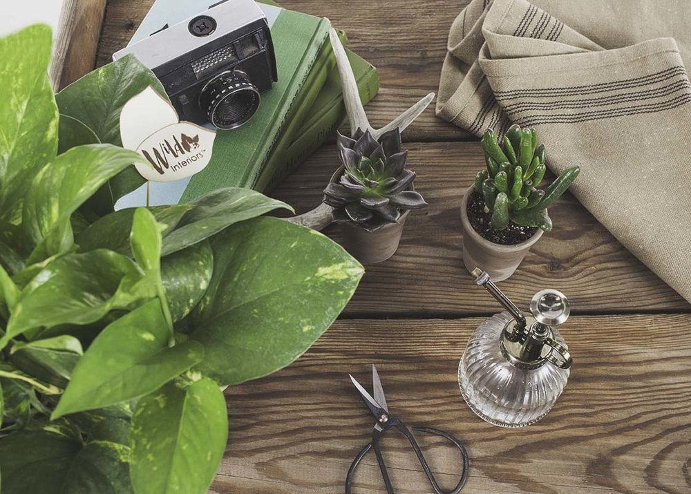 House Plants for Good Luck.jpg