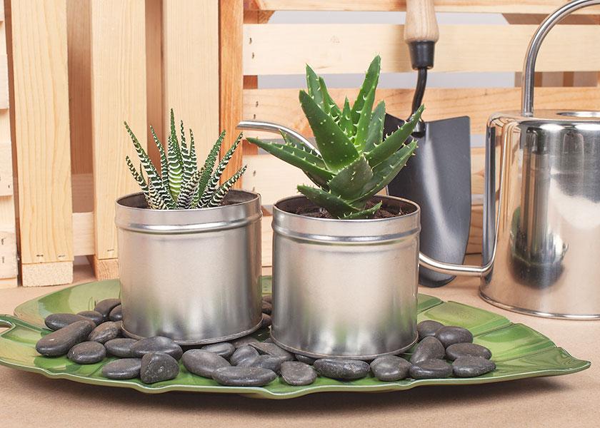 DIY Tea Tins-Main-Image.jpg