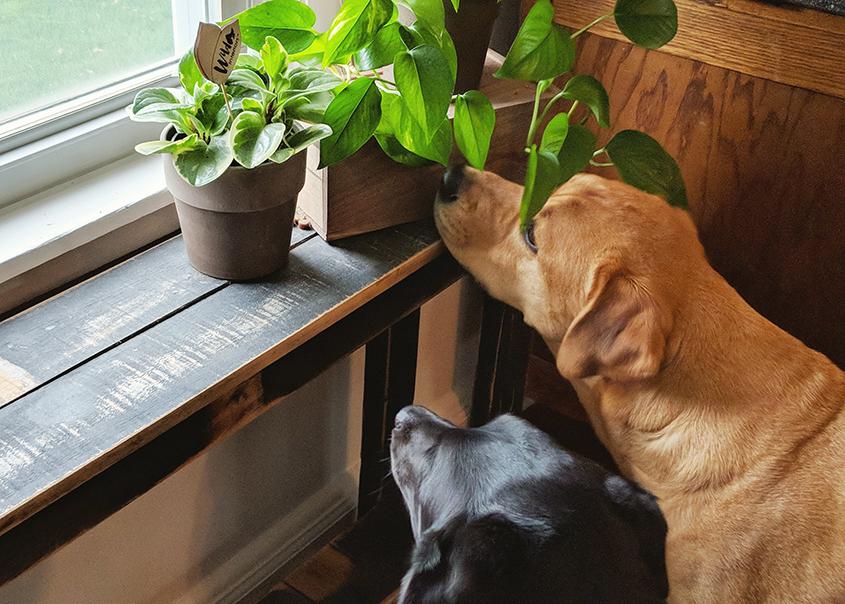 4_2-Pet-Friendly-Plants.jpg