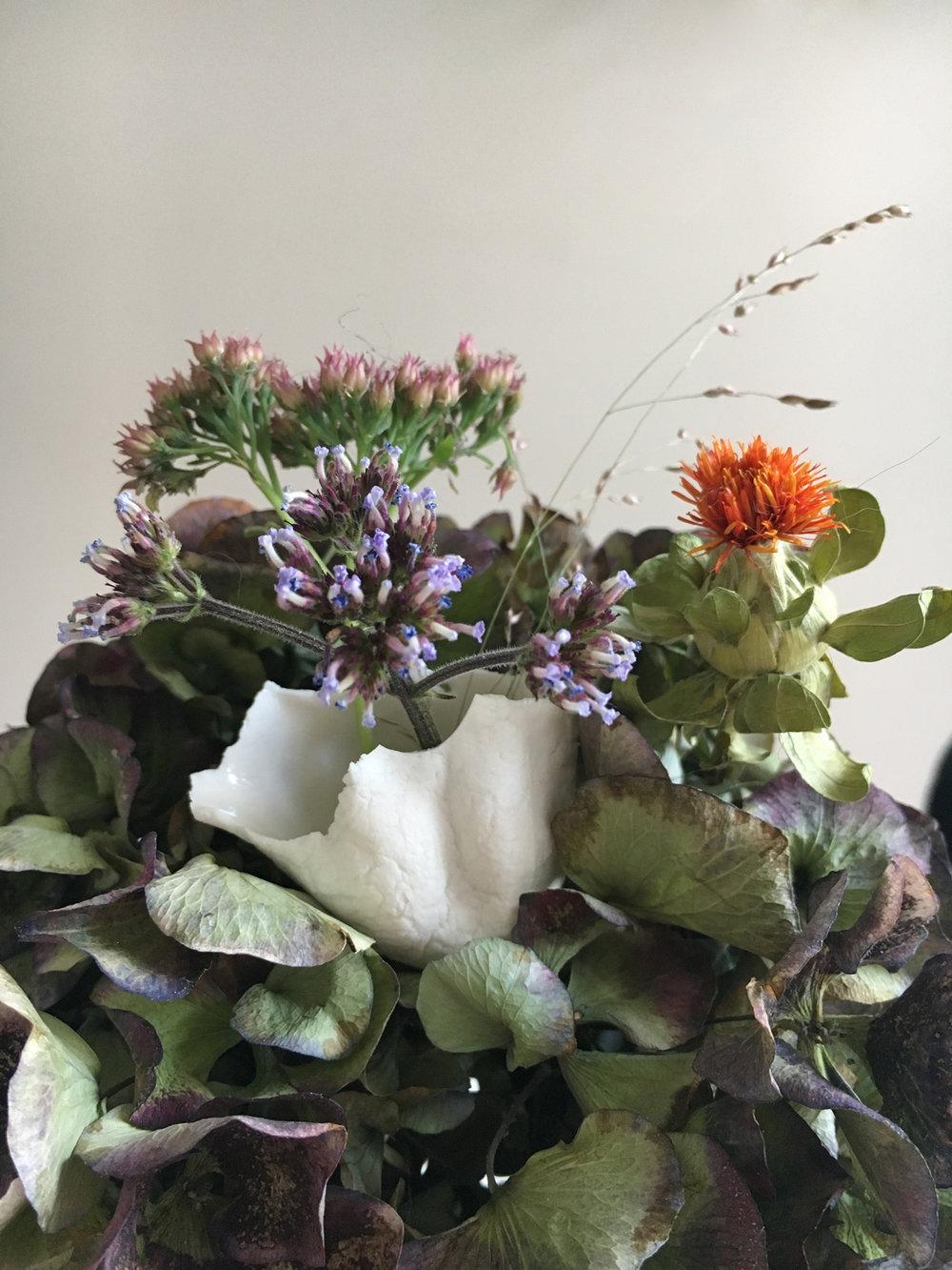 Porcelaine bud in Hortensia2.jpg
