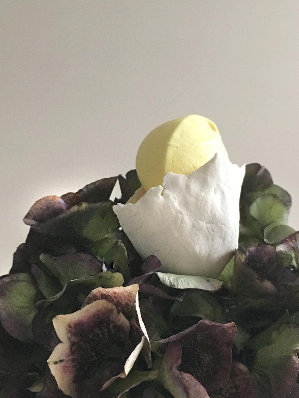 Porcelaine bud in Hortensia.jpg
