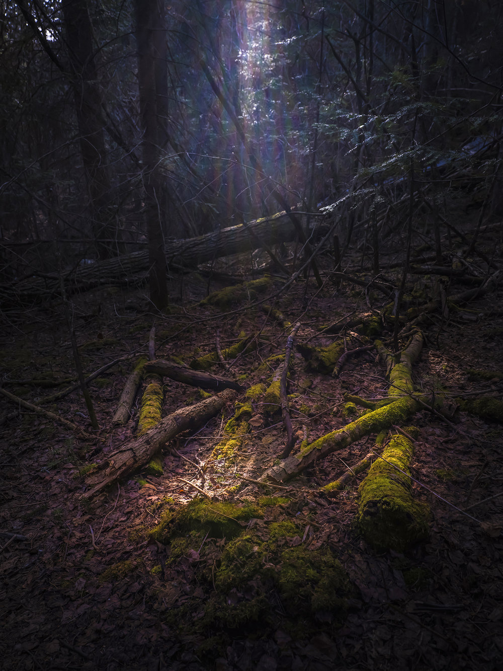 A shaft of light reaches the forest floor on the way down from the summit of Mink Mountain
