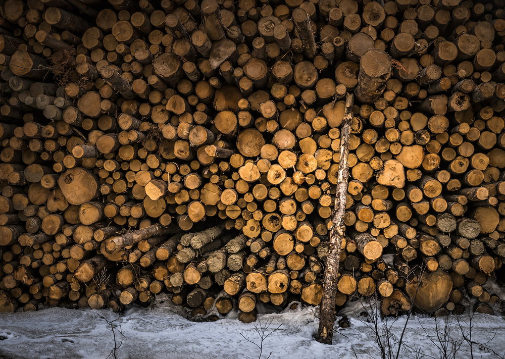 Near Bathurst, New Brunswick, a wall of logs sit awaiting manufacture. These walls of logs are fantastic textures and shapes.
