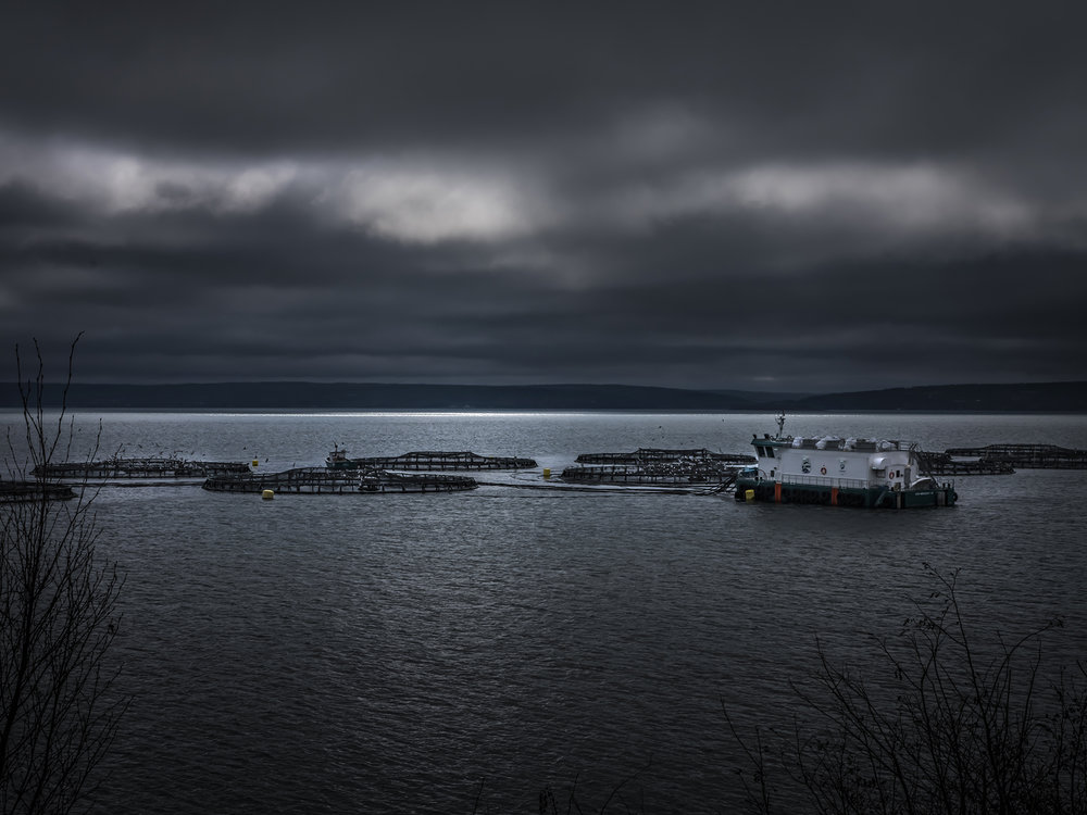 Fish farming at Digby, Nova Scotia