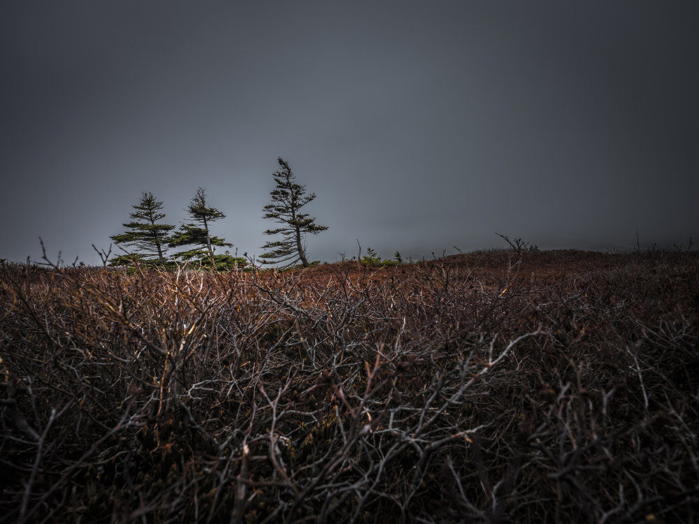 Stunted by wind and exposure, three gnarled trees huddle against the gale