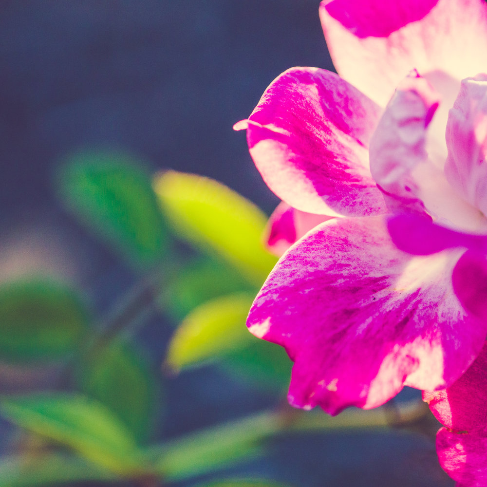 ThePaintedSquare_ErnstTrail_Flowers-1.jpg