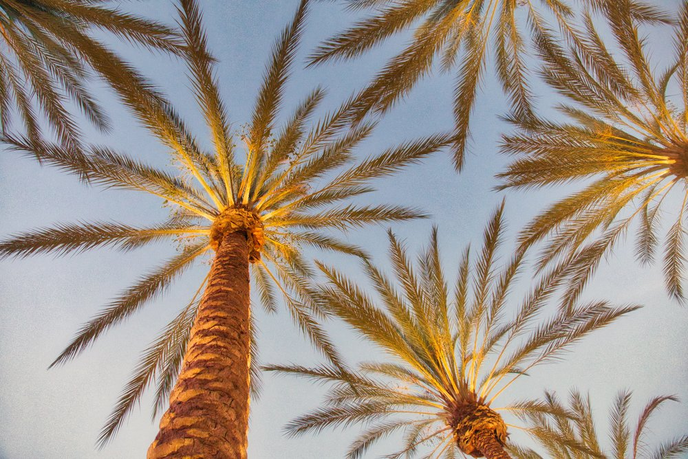 Irvine Spectrum Palms 3.jpeg