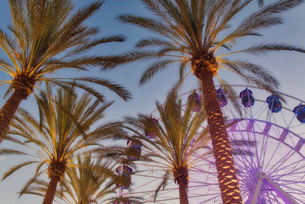 Irvine Spectrum Palms 4.jpeg
