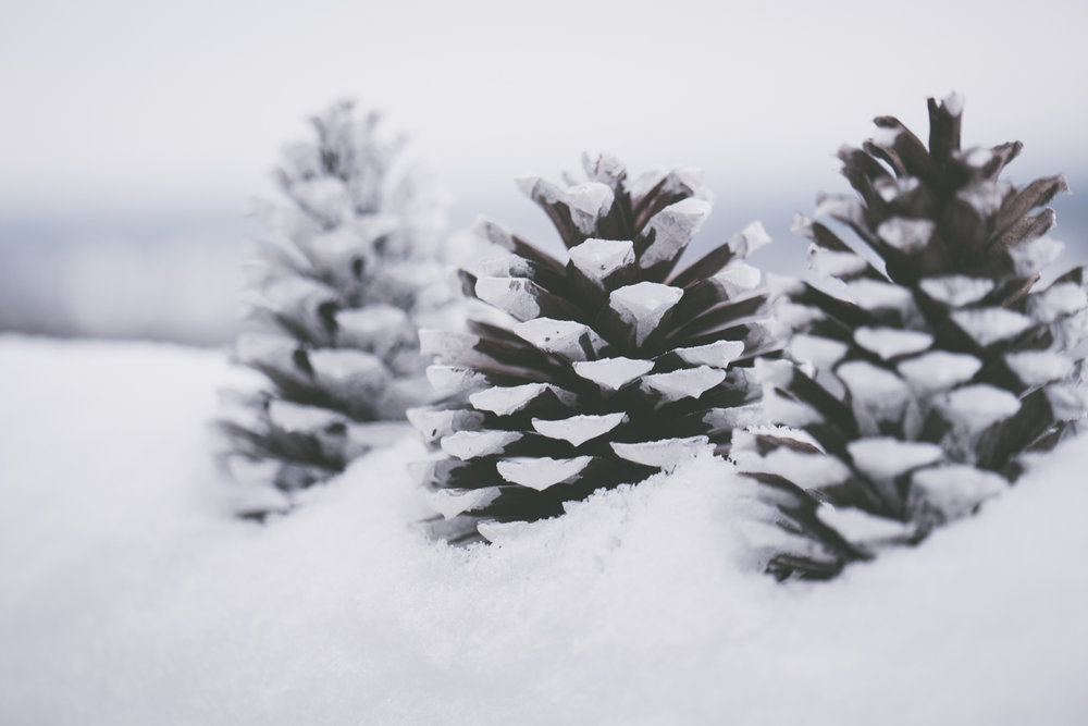 PineTrees_Snow-7.jpg