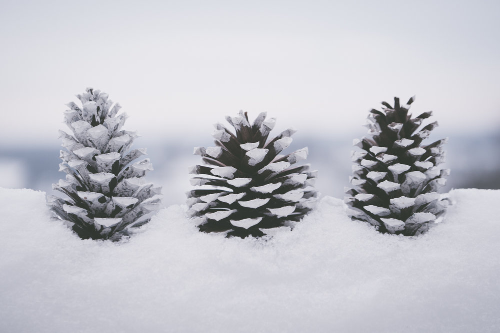 PineTrees_Snow-11.jpg