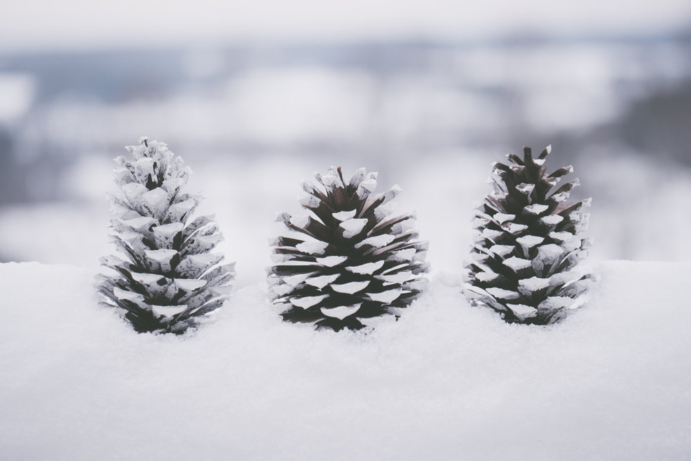 PineTrees_Snow-12.jpg