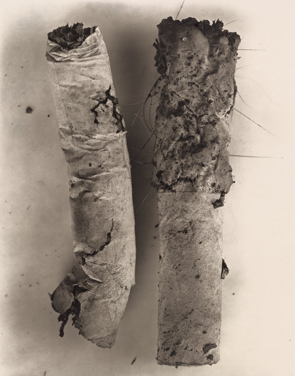 Cigarette No. 17 , New York, 1972 Platinum-palladium print © The Irving Penn Foundation