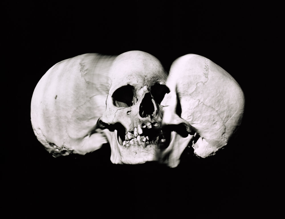 Wide Skull (A) , New York, 1993 Gelatin silver print © The Irving Penn Foundation