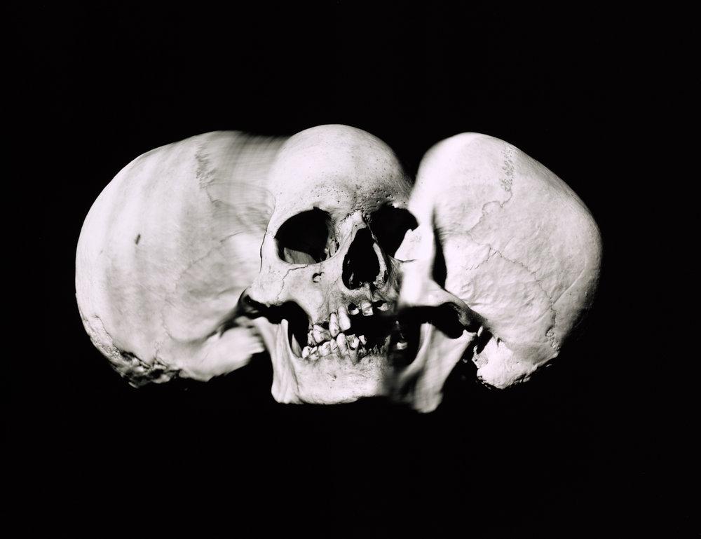 Wide Skull (A) , New York, 1993 Gelatin silver print © The Irving Penn Foundation