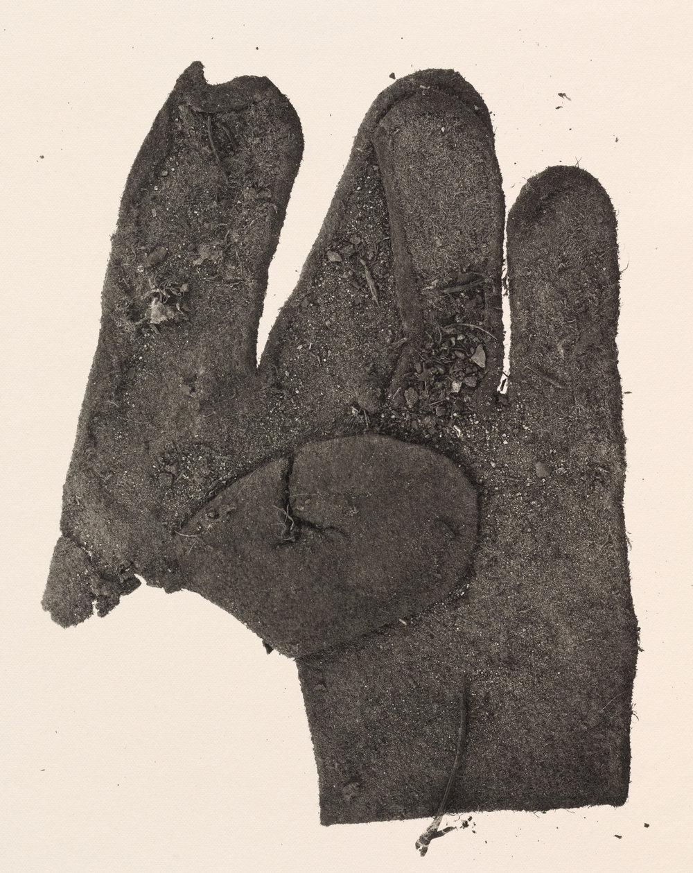 Flat Glove , New York, 1975 Platinum-palladium print © The Irving Penn Foundation