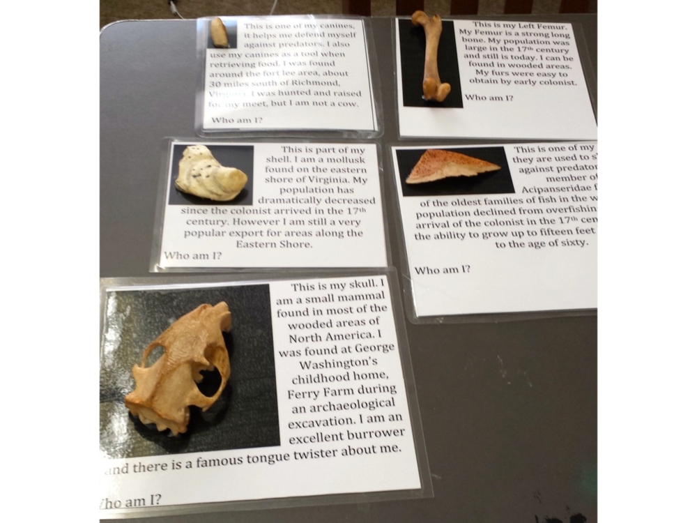 3D Printed Zooarchaeological Remains