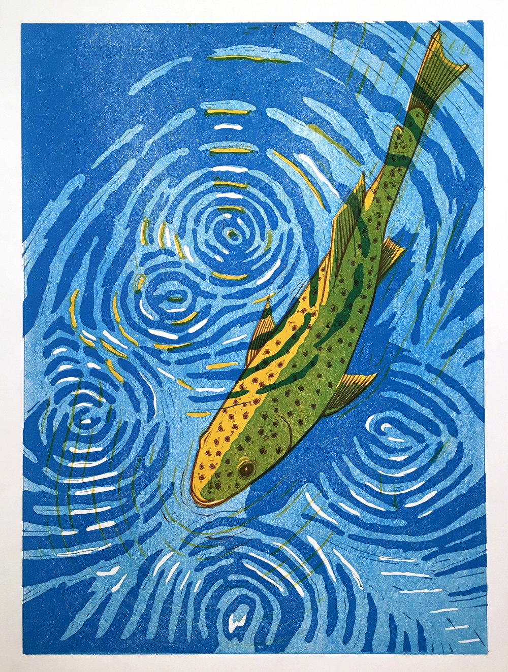 Brown Trout Through the Water