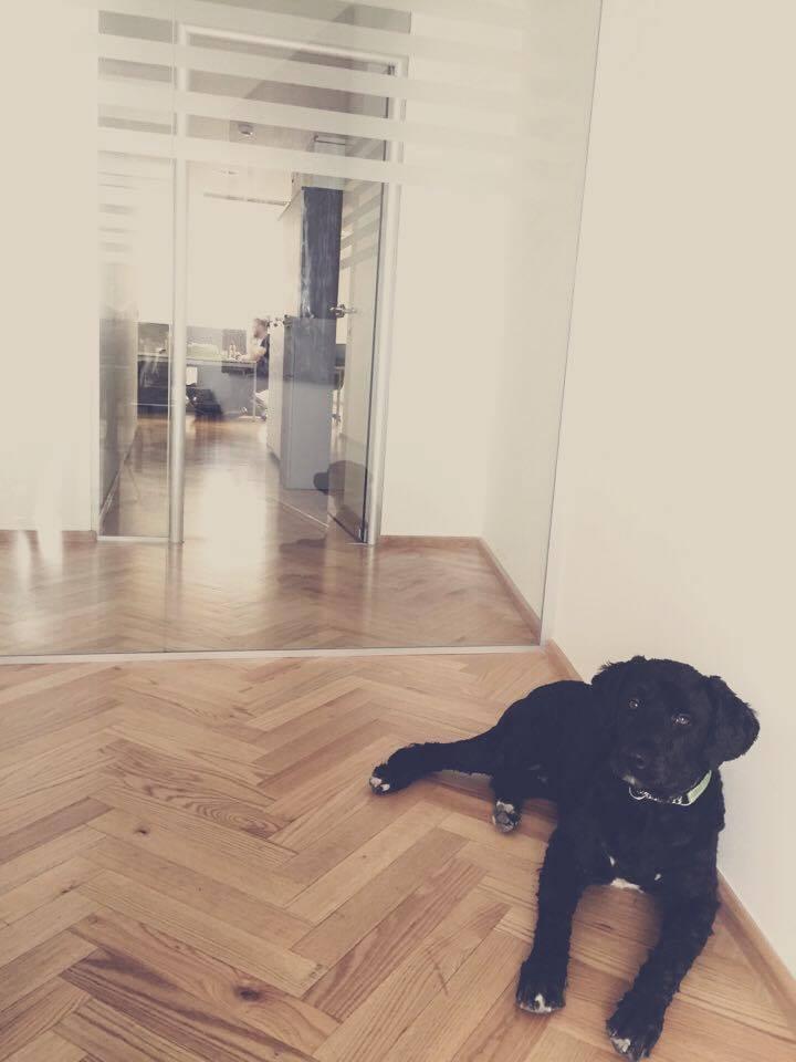 Kancelářský pes