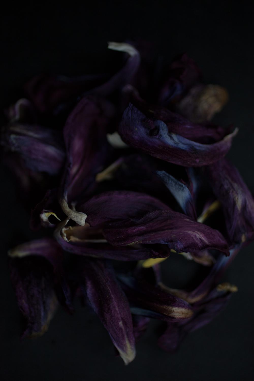 DROZDZIK_FW2018_STILLS_FLOWERS_MG_8934_photocopyrightmariliadestot.jpg