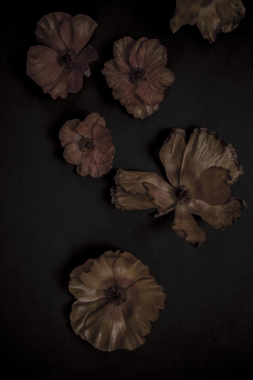 DROZDZIK_FW2018_STILLS_FLOWERS_MG_8651_photocopyrightmariliadestot.jpg