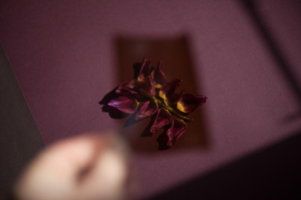 DROZDZIK_FW2018_STILLS_FLOWERS_MG_3074_photocopyrightmariliadestot.jpg