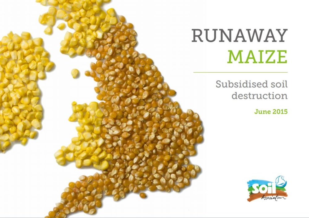 Runaway Maize: Subsidised soil destruction    Soil Association  June 2015   Maize is probably the UK's most rapidly growing crop. Research, 2014, found that 75% of late harvested maize sites showed high or severe levels of soil degradation.