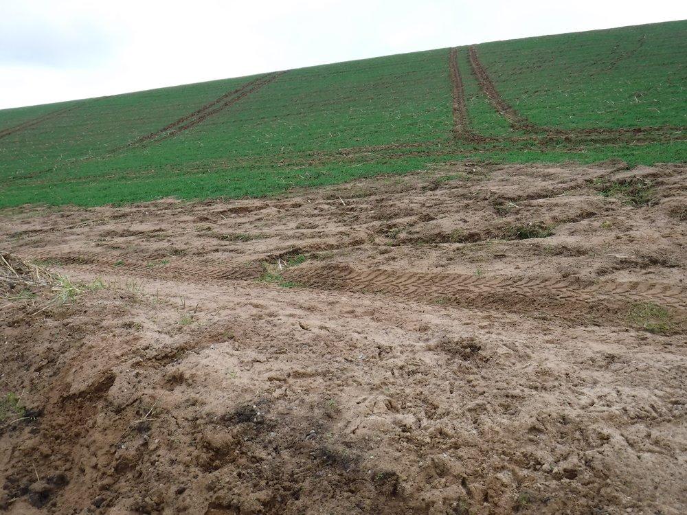 Soil erosion in the sandy soils of East Devon