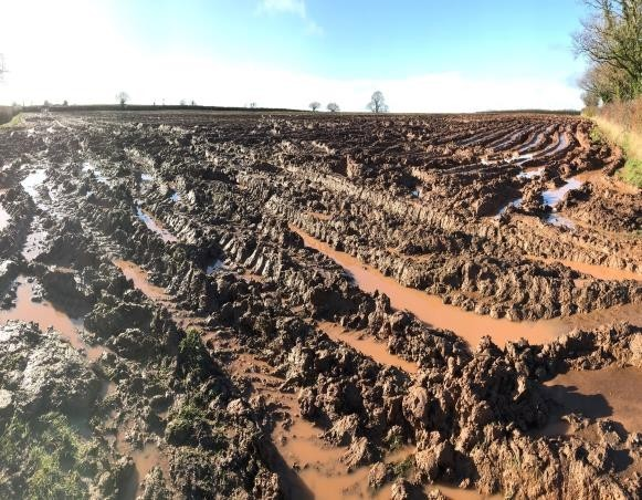 Winter harvesting of crops - This is a common soil problem in the SW where excessive runoff during heavy rain flows out of gateways. This is an offence where soil damage is over one hectare and muddy runoff can enter a watercourse.The solution is not always easy but involves ripping soils as soon as conditions allow and developing a long term winter cropping strategy to prevent, divert and capture runoff, for example in soakaway areas.