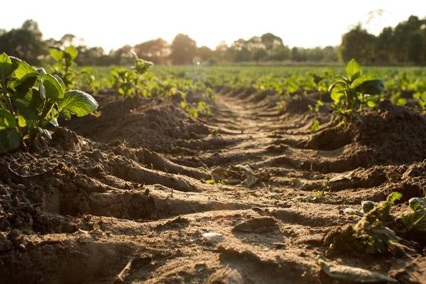 Soil field.jpg