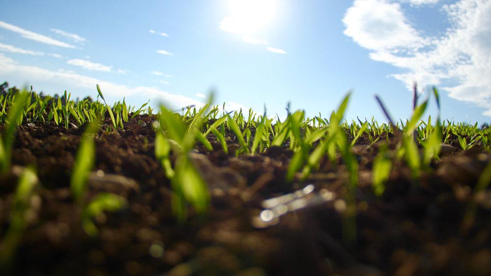 small crops growing.jpg