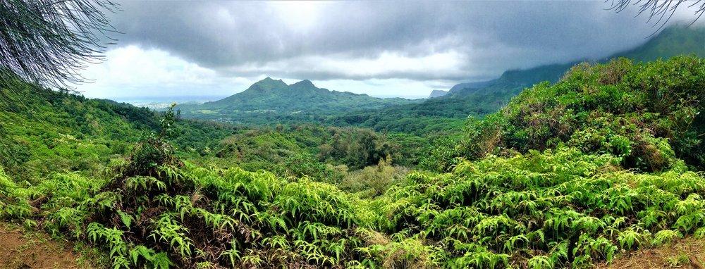 Maunawili+Trail.jpg